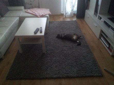 Wohnzimmer 'wohnzimmer  nach umzug'