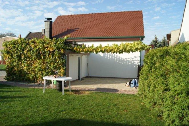 Die Terrasse überwächst gerade mit Wein als Sonnenschutz.
