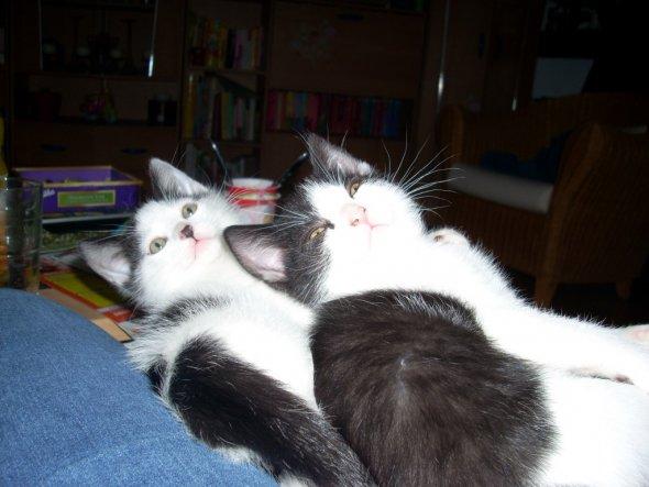 Haustiere 'Katzen'