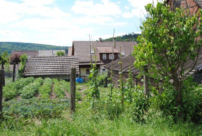 SchwiePas Gemüsegarten gehört zum Bauplatz