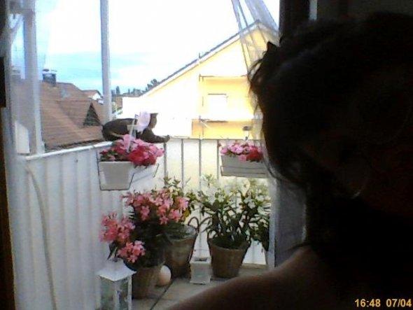 Mein kleiner süßer Balkon - rechts davon kleine Rattanbank in weiß und tisch und stuhl...reicht vollkommen.
