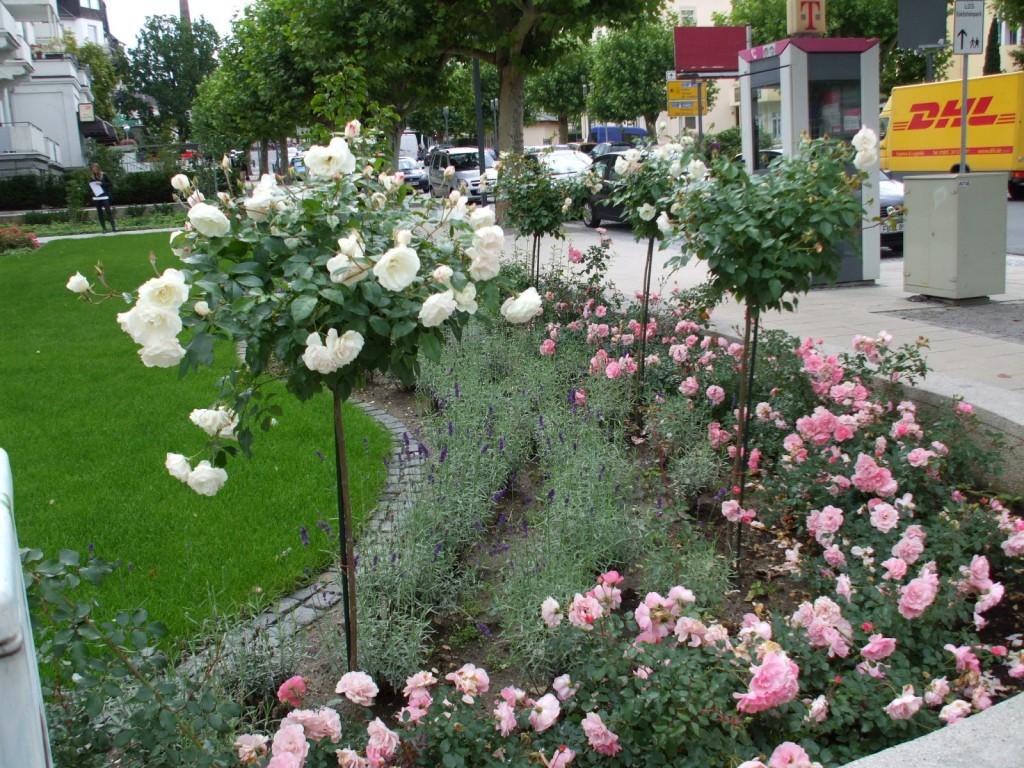 bad nauheim rosen der rosengarten in bad nauheim die. Black Bedroom Furniture Sets. Home Design Ideas