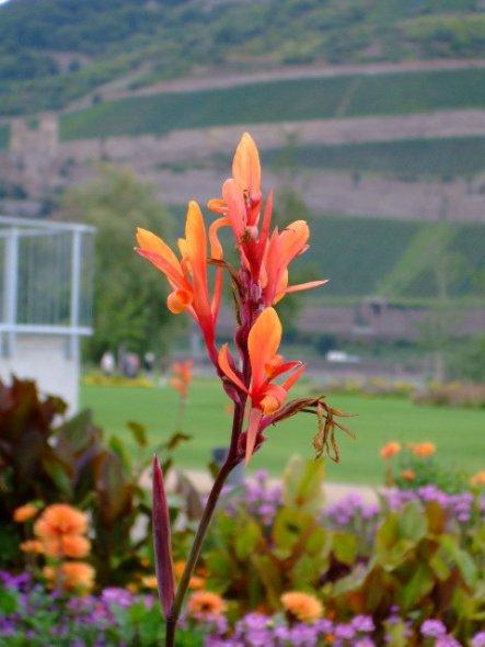 Garten 'LGS Bingen 2008'