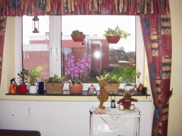Das Blumenfenster im Wohnzimmer