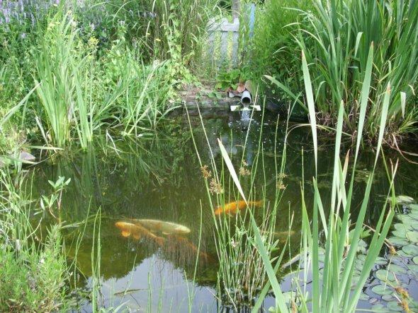 das ist das Hobby meines Mannes.Wenn erkönnte würde er das ganze Grundstück unter Wasser setzen...aber zu seinem grossen Bedauern haben wir ein gaaanz
