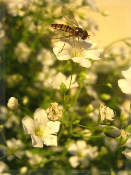 ... und allein war ich da im Sommer auch selten, allerdings sahen die zwar aus wie Wespen aber sie waren viel kleiner und haben kein Interesse an mir