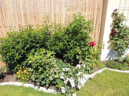 Garten 'Cornichon'
