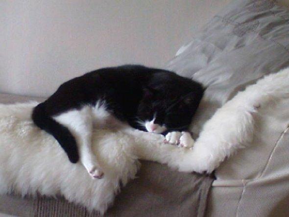 Haustiere 'kleiner Mitbewohner'