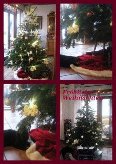 Advent und Weihnacht 2010
