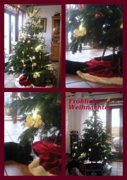 Hatte heute Hilfe beim Weihnachtsbaum schmücken. Ich wünsche euch allen ein gesundes und fröhliches Weihnachtsfest