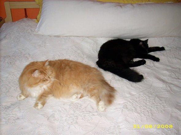 """Unsere """"Katzenkinder"""" :-)"""