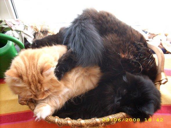 """Auch wenn es nach """"mehr"""" aussieht, es liegen nur 2 Katzen im Korb."""