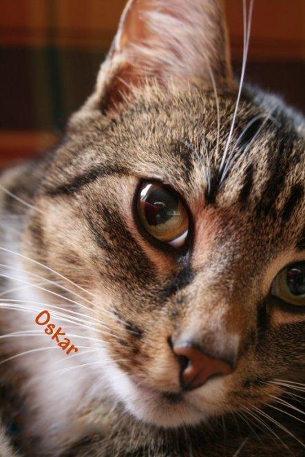 Haustiere 'Oskar'