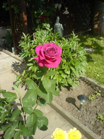 Garten 'Ruheinsel'