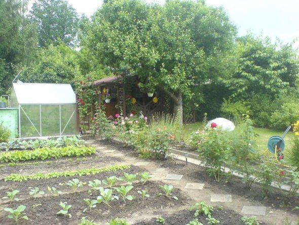 Garten 'Sonnenblumen'