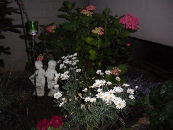 Blütenmeer im Juli 2010