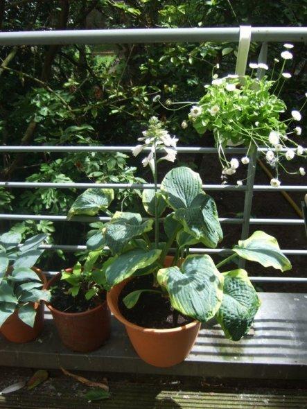 Terrasse / Balkon 'Dachterrasse 2010'