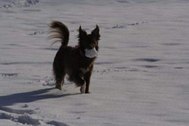 Lieblingsspiel: Schneebällen hinterherjagen und wiederbringen