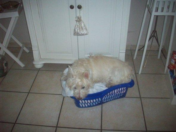 Wenn mal irgendwo ein Wäschekorb rumsteht - Nina ist drin. *ggg* Und wenn er noch so klein ist.