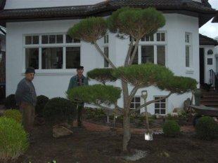 Julis Garten