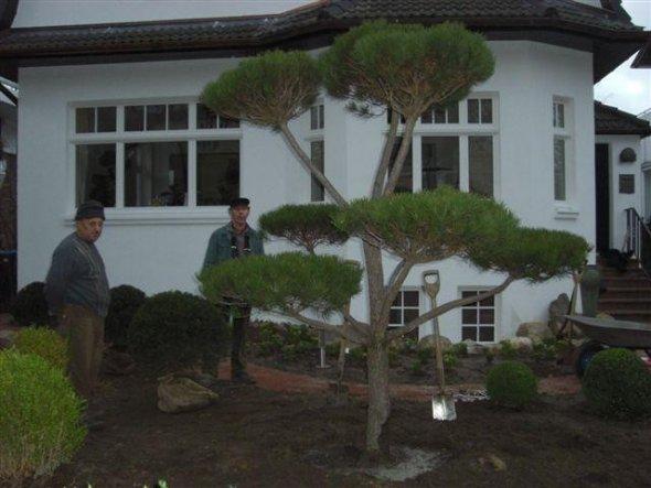 Garten 'Julis Garten'
