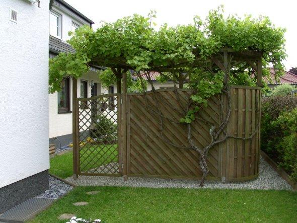 Garten 'Weinlaube und Mehr'