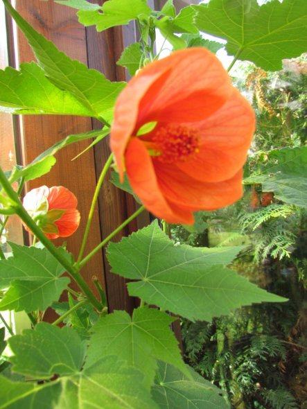 Garten 'Blütenträume'
