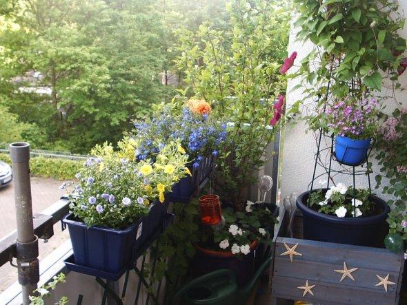 Garten 'Sommerbalkon 2014'
