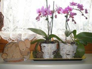 Tipp & Trick 'Blumentöpfe  verschönern.'