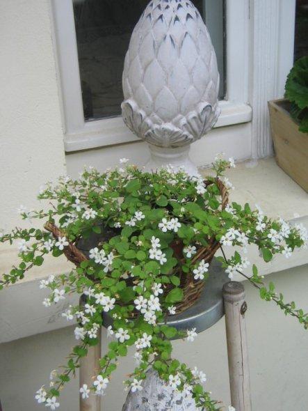 Terrasse / Balkon 'Freiluftstübchen Sommer 2009'