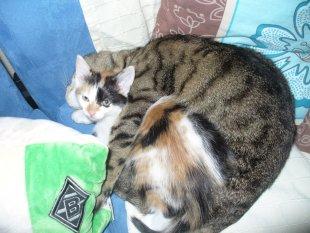 Meine 2 Katzen