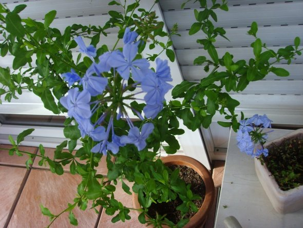 Garten 'Blütenzauber'