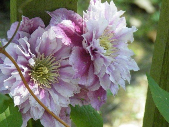Garten 'Frühlingsboten'