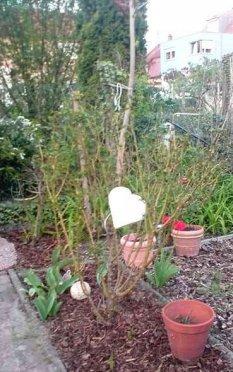Tipp & Trick 'Gartenstecker'