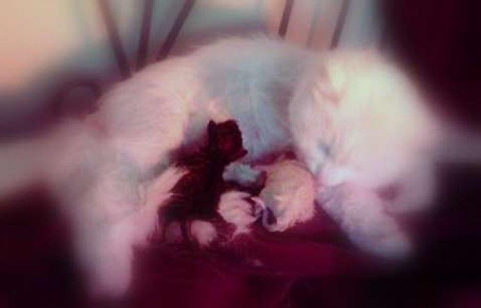 Unser Coco hat heute 3 süße Babys zu Welt gebracht. Ich bin sehr stolz.