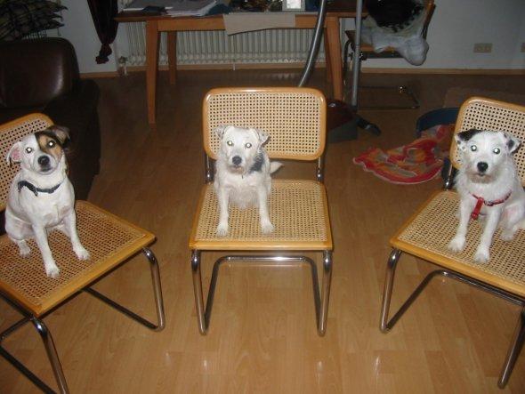 Haustiere 'Mein Raum'