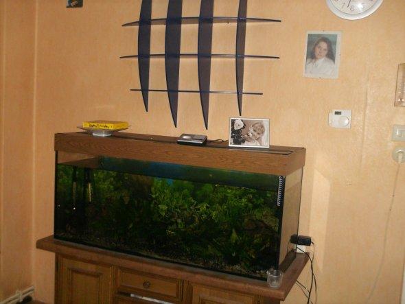 das ist gebieben owohl wir ein neues aquarium kaufen mussten weil undicht aber alles neu kaufen wegen den farben ist zu teuer da das aquarium eigentli