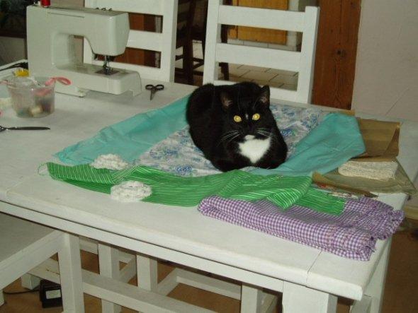 war nur kurz aus dem Raum, als ich zurückkam, thronte sie auf dem Tisch-immer den Überblick behalten ;-)