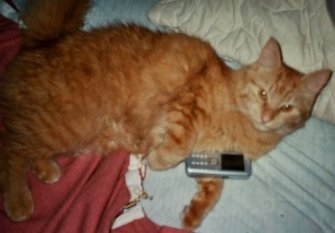 Haustiere 'Katzenfotos'