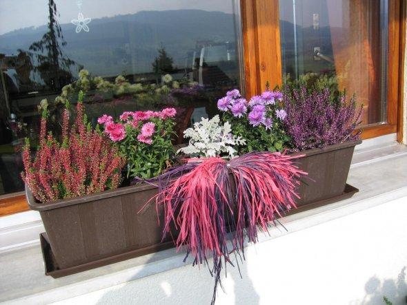 meine Winterfenster...obwohl die Sommerblumen am Balkongeländer noch immer blühen:-)