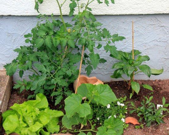 der kleine Garten meiner Kinder mit Tomaten, Paprika, Gurke und Salat