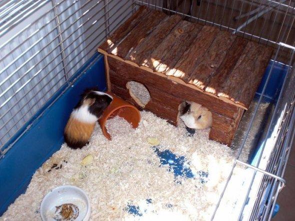 Unsere Männer in ihrem alten Käfig; der kleine Mogli wohnt inzwischen woanders, und Papa Giotto ist zu den Damen auf den Balkon gezogen.