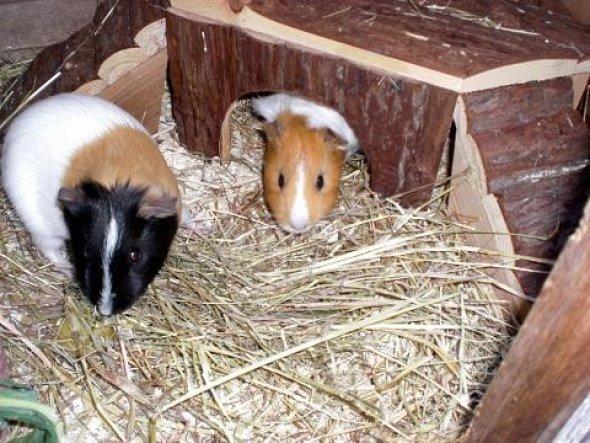 Tiny und Lola haben bei meinen Eltern ein neues Zuhause gefunden.