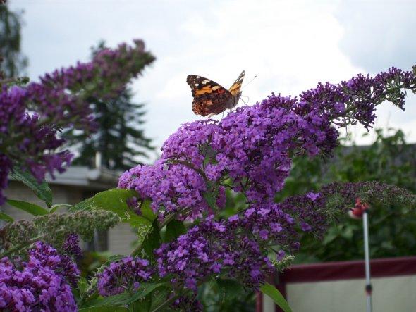 Garten 'Gartenbesucher'
