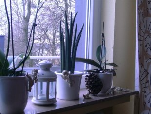Schne Wohnideen Fensterbank Deko Kerzen Pflanzen