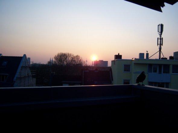 Terrasse / Balkon 'Dachterasse'