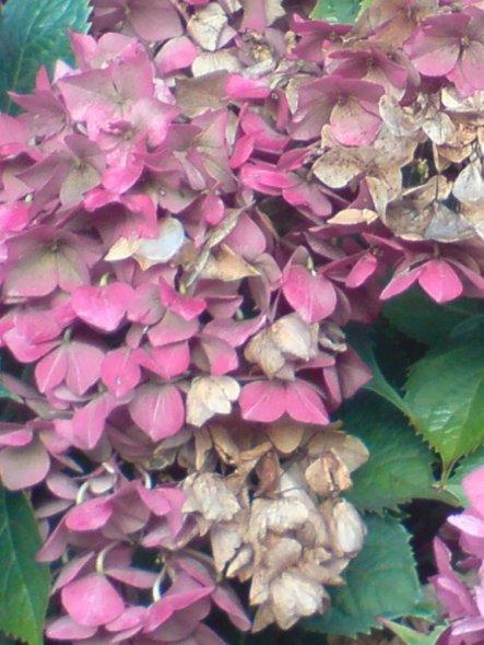 Herbst, die Winterruhe der Pflanzen beginnt.