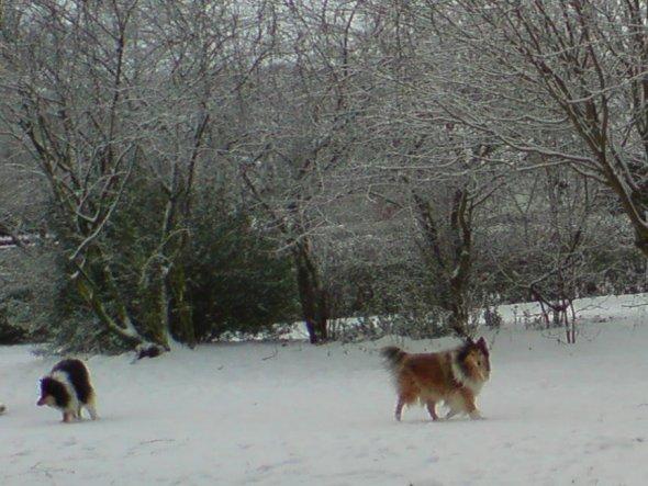 Hunde lieben SChnee abgöttisch :-)