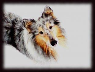 * Hundepfoten im Schnee *