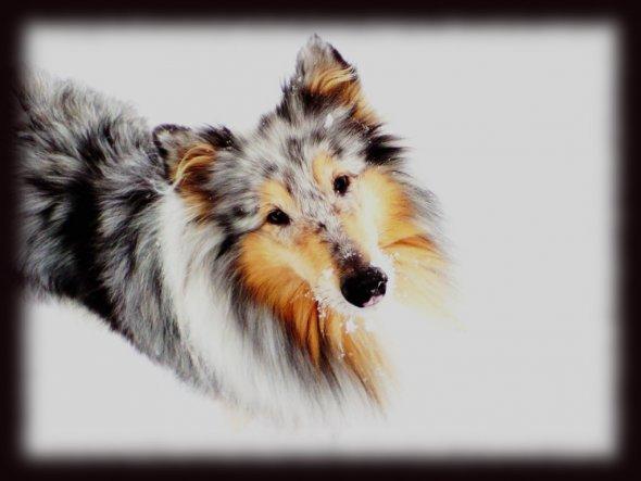 """""""Hunde sind unsere Verbindung zum Paradies. Sie kennen nichts Böses oder Neid oder Unzufriedenheit. Mit einem Hund an einem herrlichen Nachmittag an e"""